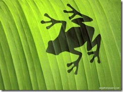 Froggy-301412